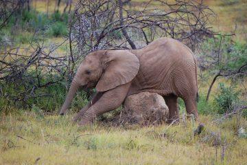 baby-elephant-111395_960_720